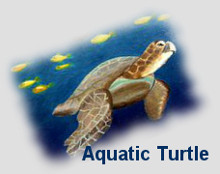 aquatic turtle for career and support